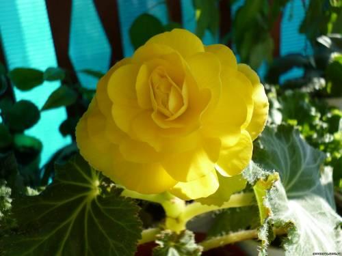 Вредители и болезни семена цветов